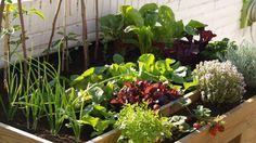 Cómo crear un huerto en casa con hierbas aromáticas