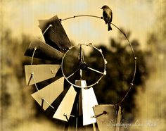 Vintage Windmill with bird Nature Photography by Ljartdesigns, $7.50