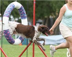 CoolPetZ   Social Pet Network Köpek eğitimi nasıl olur? #eğitim #köpek #CoolPetZ