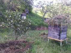 Another hive with straw on top. Must be insulation? From an Algerian FB page https://www.facebook.com/SmailiApiculture/