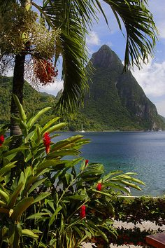 St Lucia, Island in the Caribbean. Oh how I would love to have a second home in the Caribbean! Places Around The World, Oh The Places You'll Go, Places To Visit, Dream Vacations, Vacation Spots, Vacation Travel, Beautiful World, Beautiful Places, Sainte Lucie