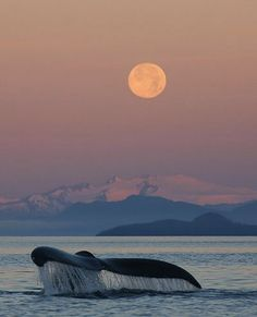 Whale tail & the moon. #beauty