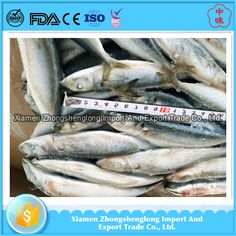 Fish food of round scad-frozen blue scad fish for sale.