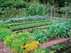 Image result for fall gaRdens