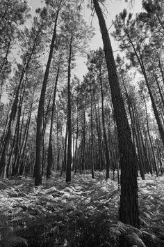 O Meu Mundo Pela Lente: A Floresta Negra