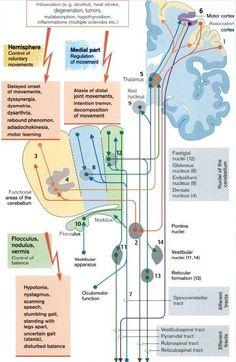 lesions of the cerebellum