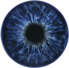 IRIS (We Share Our Chemistry with the Stars) SO 200L by Marc Quinn (2009)