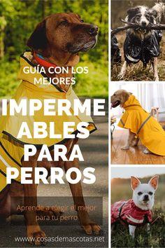 Bolsa de Aperitivos BIGBIGWORLD Bolsa de Entrenamiento para Perros dispensador de Bolsas de residuos de Caca para la Cintura