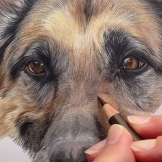 The Secrets Of Drawing Realistic Pencil Portraits - Colour pencil drawing Secrets Of Drawing Realistic Pencil Portraits - Discover The Secrets Of Drawing Realistic Pencil Portraits Animal Paintings, Animal Drawings, Pencil Drawings, Art Drawings, Dog Artist, Pencil Drawing Tutorials, Drawing Ideas, Colored Pencil Techniques, Color Pencil Art