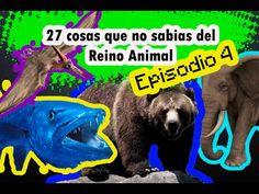 27 cosas que no sabias del (Reino Animal). Episodio 4.  #ElCondorMilenario,  #Curiosidades, #CosasQueNoSabias, #CosasDeLosAnimales, #Aves, #Animales, #Peses, #Fauna, #PlanetaTierra, #ElMundo, #Insectos, #Flora, #MundoCurioso, #CosasQueNoSabiasDeLosAnimales, #TodoSobreLosAnimales, #ReinoAnimal #MundoSalvaje,  #27CosasQueNoSabias, #27CosasQueDesconocías,