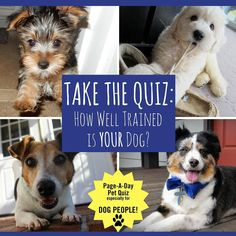 At Page-A-Day we love your pets no matter what. Take our quiz and find out if your pup is perfectly polished . . . or just plain pesky! Link in bio to take the quiz now. . . . . #365Dogs #quiz #petquiz #dogquiz #petsofpageaday #DogsofInstagram #DogsofPageADay #DogsofInstaworld #dogs_of_instagram #petstagram #dogstagram #instagramdogs #doglover #instadog #instapet #dogcontest #blacklab #petcontest #dogcontest #dogphoto #dogpic