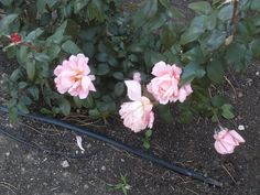 PT 322 OCT 13 FLOWERS IN NAMPA IDAHO SEVENTH DAY ADVENTIST CHURCH