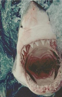 this is the most beautiful shark I have ever seen.  I want to go swimming with him.