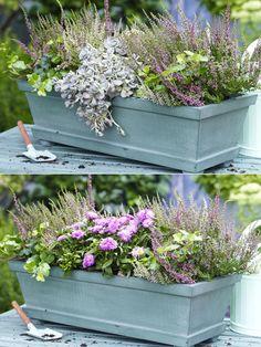 Duas variantes: plantar a caixa da varanda outonalmente - Garten - Balcony Planters, Balcony Garden, Garden Planters, Hanging Planters, Most Beautiful Gardens, Amazing Gardens, Container Plants, Container Gardening, Pot Jardin