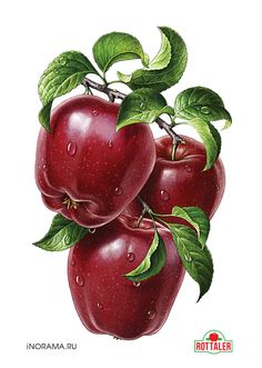 """Red apples. Illustration for the line of juices ROTTALER (OOO """"Neva cheese""""). http://www.nevcheeses.com"""