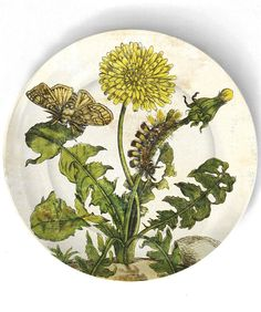 dandelion1600's botanical artwork reproduced on by TheMadPlatters, $18.00