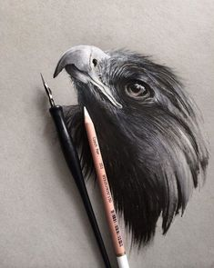 Wildlife Art by Jonathan Martinez - Strathmore Artist Papers