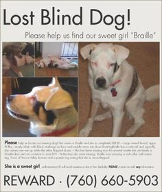 I'm not sure who wouldn't share this flyer- it's for a lost dog- a BLIND dog- in the Riverside/Desert Hot Springs area of California. Braille is a very sweet girl and has been mis… Female Names, Puppy Mills, Losing A Dog, Find Pets, Lost & Found, Animal Rights, My Heart Is Breaking, Animal Rescue, Something To Do