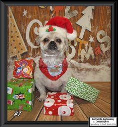 Peanut Small Breed, Dog Grooming, Dogs, Gifts, Presents, Pet Dogs, Doggies, Favors, Gift