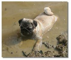 Now there's a noodle for ya'... wallowing in mud... no, no, no... this is not a good thing...