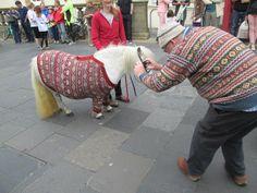 Knit & Destroy's photo of a Shetland Pony in a Shetland fairisle jumper at the Fairisle Festival.