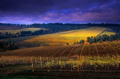 Sunrise through Fall storm over Knudsen Vineyard seen from Bella Vida in the Red Hills above Dundee, Willamette Valley, Oregon, USA.  Janis Miglavs photography.
