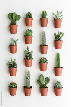 Water cactus when dry, NOT BONE DRY! That's a very quick way to kill a cactus. When the cactus is allowed to become bone dry, the small. Decoration Cactus, Decoration Plante, Garden Decorations, Plant Wall, Plant Decor, Cactus House Plants, Cactus Cactus, Cactus Planters, Container Gardening
