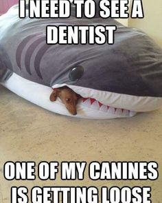 Don't miss your checkup at the dentist! #goodmorning #dentistry #dentist #canine #shark #dog #checkup #teeth #careful #dackel by xbibibrowniex Our General Dentistry Page: http://www.myimagedental.com/services/general-dentistry/ Google My Business: https://plus.google.com/ImageDentalStockton/about Our Yelp Page: http://www.yelp.com/biz/image-dental-stockton-3 Our Facebook Page: https://www.facebook.com/MyImageDental Image Dental 3453 Brookside Road Suite A Stockton CA 95219 (209) 955-1500 Mon…