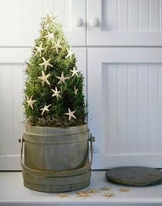 coastal chic Christmas | Potted in an old pail. Coastal farmhouse chic! Seen at Better Homes ...