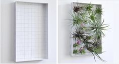Wall frame for airplants