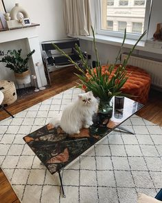 Kitty cat loves the flowers too 💐 Furniture Inspiration, Room Inspiration, New Living Room, Living Room Decor, Ibiza, Shag Rug, Building A House, Shell, Kitty