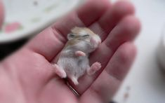 25 Breathtakingly Cute Hamster Photos That Will Melt Your Heart! #11 Is Fantastic!