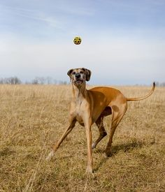 Where's that ball? Photo by Danielle Mussman -- National Geographic Your Shot