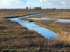 Ditch on the nature island of Tiengemeten, The Netherlands
