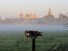 43 Reasons Living In Oxford Ruins You For Life Oxford City, Longhorn Cattle, Great Run, Oxford England, England And Scotland, River Thames, Ireland Travel, Great Britain, Monument Valley