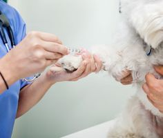 Find out what can be learned about your pet's health with a few tests conducted on samples of blood and urine. Pet Health, Health Care, Train Info, Blood Test, Your Pet, Nursing, Insight, Dog, Pets