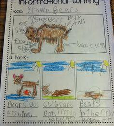 informational writing - Life in First: Bears, Bears, Bears