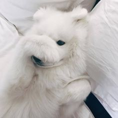so sweet dogs love animals pets Cute Dogs And Puppies, Baby Dogs, I Love Dogs, Puppies Tips, Tiny Puppies, Cute Baby Animals, Funny Animals, Kairo, Samoyed Dogs