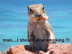 funny-squirrel-image-06.jpg (450×340)