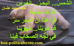 """Couplet of political poetry from """"The Sun, the Sea, the Wedding"""", by poet and journalist Khalid Mohammed Osman designed on polar bear testing the melting ice."""