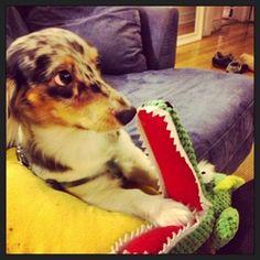 Gator got your paw?
