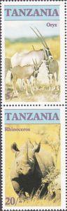 Gemsbok (Oryx gazella), White Rhinoceros (Ceratotherium simu