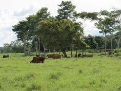 Queremos desearles un feliz fin de semana con esta imagen de nuestras haciendas. ¡Diviértanse! #HaciendasFranciayLusitania
