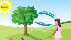 Everyone knows oxygen gas is helpful in breathing of human being. Oxygen gas is also used in many chemical and industrial applications. Various acids are made with oxygen like sulfuric acid, nitric acid and some other compounds