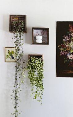 Vine House Plants, House Plants Decor, Plant Decor, Inside Plants, Room With Plants, Cool Plants, Indoor Garden, Indoor Plants, Wall Hanging Plants Indoor