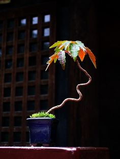 Bonsai can take many forms...  all of them beautiful.