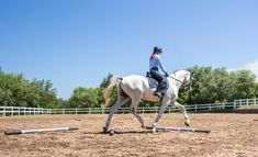 Each time you school, you have a chance to improve your horse's way of going. Walking Poles, Best Stretches, Easy Workouts, Dressage, Equestrian, Pony, The Incredibles, Horses, Engagement