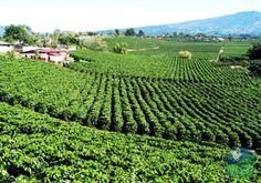 Britt Coffee Plantation, San Jose, Costa Rica
