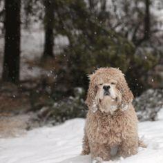 Blogi — TOAST photos Pet Portraits, Toast, Snow, Pets, Animals, Outdoor, Outdoors, Animales, Animaux