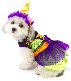 Neon Witch Costume for Small Dogs